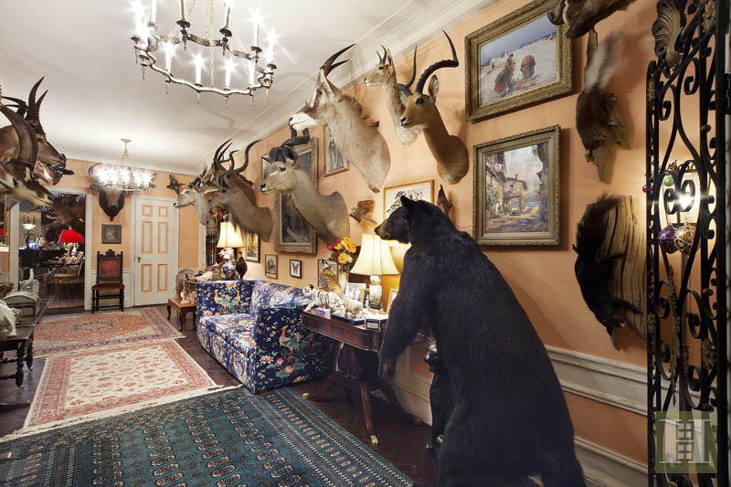 Taxidermy Apartment 3